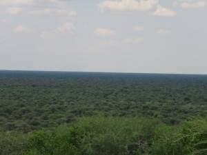 לא רק חול. יש גם ירוק בנמיביה.