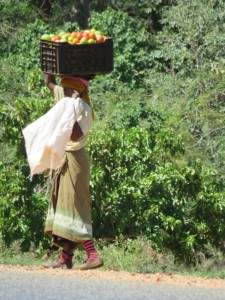 בדרך למכור עגבניות